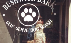 bushwick bark.jpg