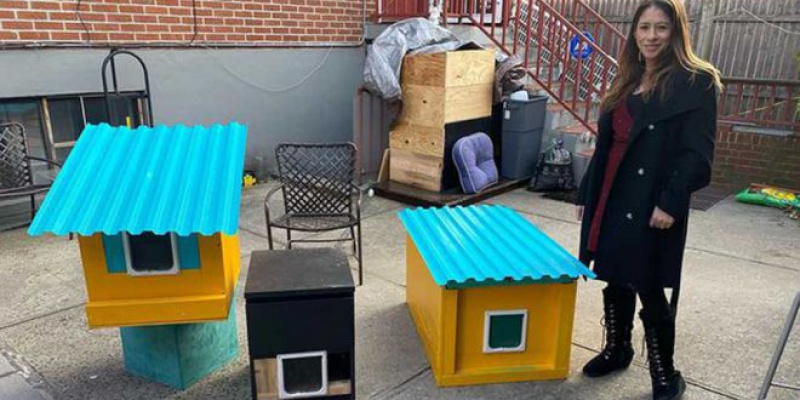 Donation Based Cat Condos by Phil Cappadora